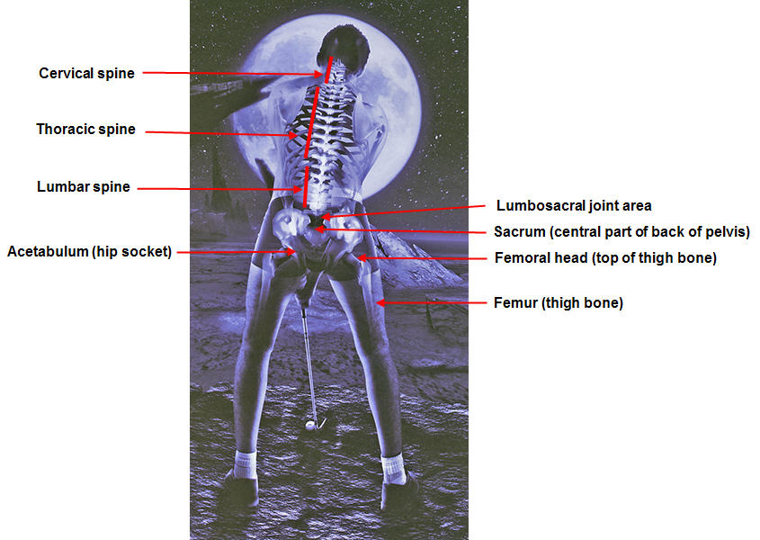 http://perfectgolfswingreview.net/SevenLaws-Pelvis.jpg
