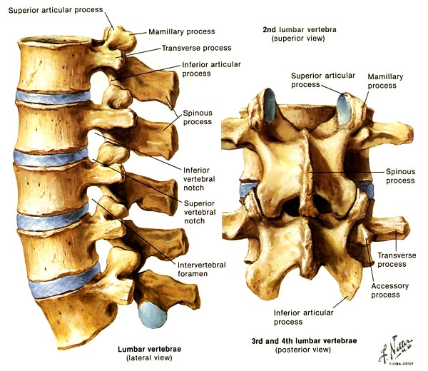 lumbar spine - neuroradiology, Human Body